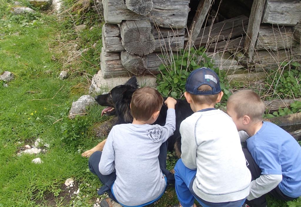 Reševalni psi na obisku otrok na Planini Jezero 2016