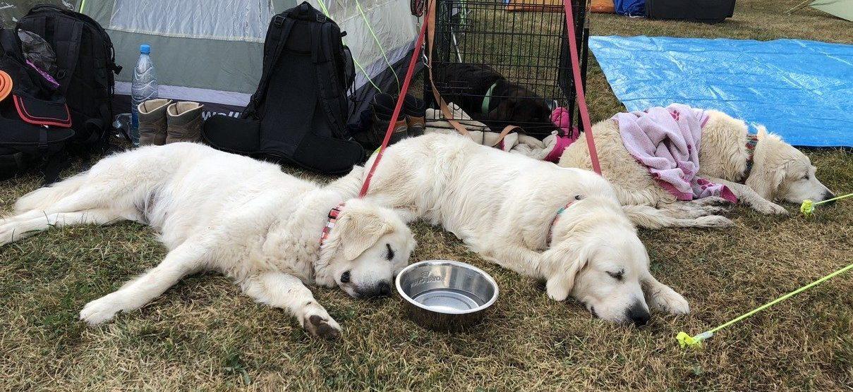 25. Mednarodni tabor reševalnih psov – Varpolje